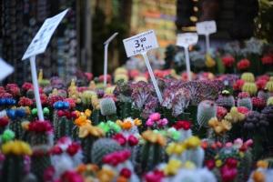 Marché aux fleurs Amsterdam Bloemenmarkt