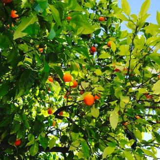 Oranges d'Athènes