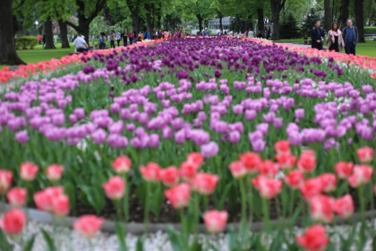 Les jardins du Kremlin à Moscou