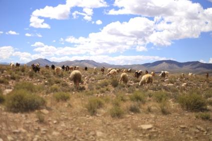 Roadtrip Quebrada de Humahuaca
