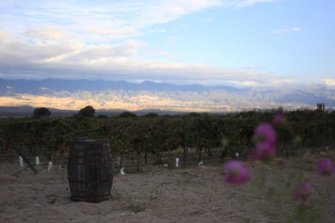 Les vignes argentines